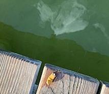 Keine Kippe in den See